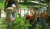 Новости с нашего огорода