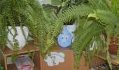 Неделя экологии в детском саду