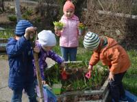 Посадка цветов на клумбу